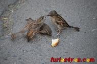 FOTOGRAFIA SĂPTĂMÂNII: Când doi se ceartă, al treileacâştigă!!!